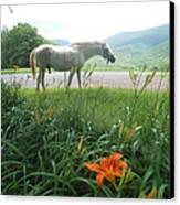 Summer Day Memories With The Paso Fino Stallion Canvas Print by Patricia Keller