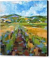 Summer Field 1 Canvas Print by Becky Kim