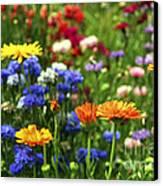 Summer Flowers Canvas Print by Elena Elisseeva