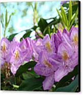Summer Rhodies Flowers Purple Floral Art Prints Canvas Print by Baslee Troutman