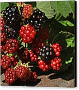Summer's Bounty Canvas Print by Donna Kennedy