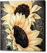 Sunflower Blossoms Canvas Print by Elena Elisseeva