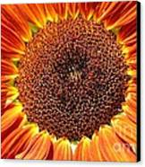 Sunflower Burst Canvas Print by Kerri Mortenson