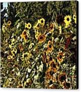 Sunflower Fields Forever Canvas Print by Peggy Hughes