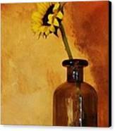 Sunflower In A Brown Bottle Canvas Print by Marsha Heiken
