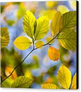Sunlit Autumn Leaves Canvas Print by Natalie Kinnear