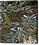Sunlit Mountain Laurel Canvas Print by JW Hanley