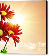 Sunrays Flowers Canvas Print by Carlos Caetano