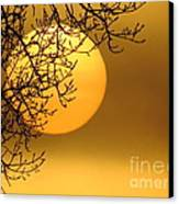 Sunrise Through The Fog Canvas Print by David Lankton