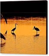 Sunset Silhouette Canvas Print by Al Powell Photography USA
