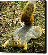 Surprise Mister Squirrel Canvas Print by Shawna Rowe