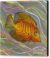 Surgeonfish Canvas Print by Anna Skaradzinska