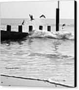 Surprised Seagulls Canvas Print by Anne Gilbert