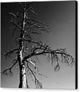 Survival Tree Canvas Print by Chad Dutson