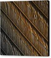 Swallow Feather Detail, Sem Canvas Print by Power And Syred