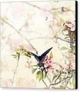 Swallowtail In Spring Canvas Print by Stephanie Frey