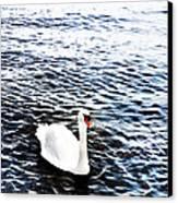 Swan Canvas Print by Mark Rogan