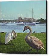 swans at Christchurch harbour Canvas Print by Martin Davey