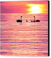 Swans On The Lake Canvas Print by Jon Neidert