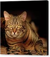Tabby Tiger Cat Canvas Print by Renee Forth-Fukumoto