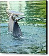 Tails Canvas Print by Cheryl Young