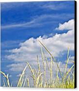 Tall Grass On Sand Dunes Canvas Print by Elena Elisseeva
