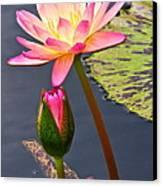 Tall Waterlily Beauty Canvas Print by Byron Varvarigos