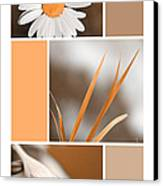 Tangerine Flowers Collage Canvas Print by Christina Rollo