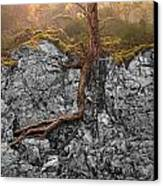 Taproot Canvas Print by Mary Jo Allen