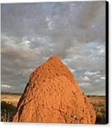 Termite Mound, Exmouth, Australia. Canvas Print by Science Photo Library