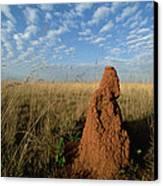 Termite Mound In Cerrado Grassland Emas Canvas Print by Tui De Roy