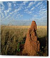 Termite Mound In Cerrado Grassland Emas Canvas Print by Tui De Roy