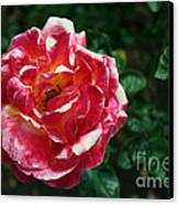 Texas Centennial Rose Canvas Print by M Valeriano