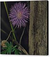 Thailand  Purple Wild Flowers Canvas Print by David Longstreath