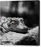 The Alligator's Eying You Canvas Print by Linda Leeming