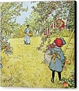 The Apple Harvest Canvas Print by Carl Larsson