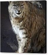 The Bobcat Canvas Print by Saija  Lehtonen