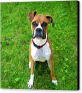 The Boxer Canvas Print by Donna Doherty