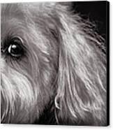 The Dog Next Door Canvas Print by Bob Orsillo