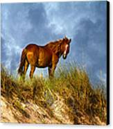 The Dune King Canvas Print by Betsy C Knapp
