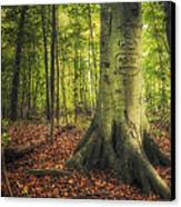 The Giving Tree Canvas Print by Scott Norris