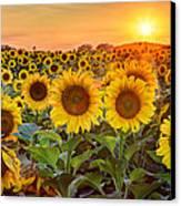 The Golden Hour Canvas Print by Jill Van Doren Rolo