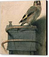 The Goldfinch Canvas Print by Carel Fabritius