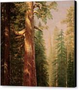 The Great Trees Mariposa Grove California Canvas Print by Albert Bierstadt
