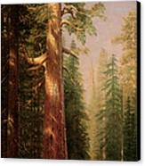 The Great Trees Mariposa Grove California Canvas Print by Albert Bierstadt