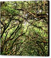The Green Mile Savannah Ga Canvas Print by William Dey