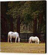 The Horse And The Pony - Standard Size Canvas Print by Mary Machare