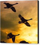 The Journey South Canvas Print by Bob Orsillo