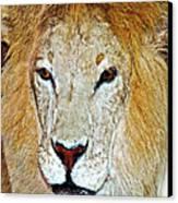 The King Canvas Print by Susan Leggett