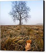 The Lone Oak Canvas Print by Davorin Mance